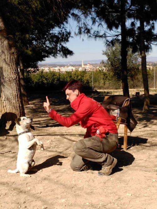 Escuela canina CANILAND - Seminario Entrenamiento con clicker