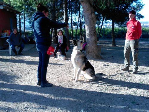 Seminario Entrenamiento con clicker, CANILAND, Educación y adiestramiento canino, Valencia