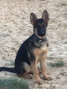 Escuela canina CANILAND - cursos de cachorros
