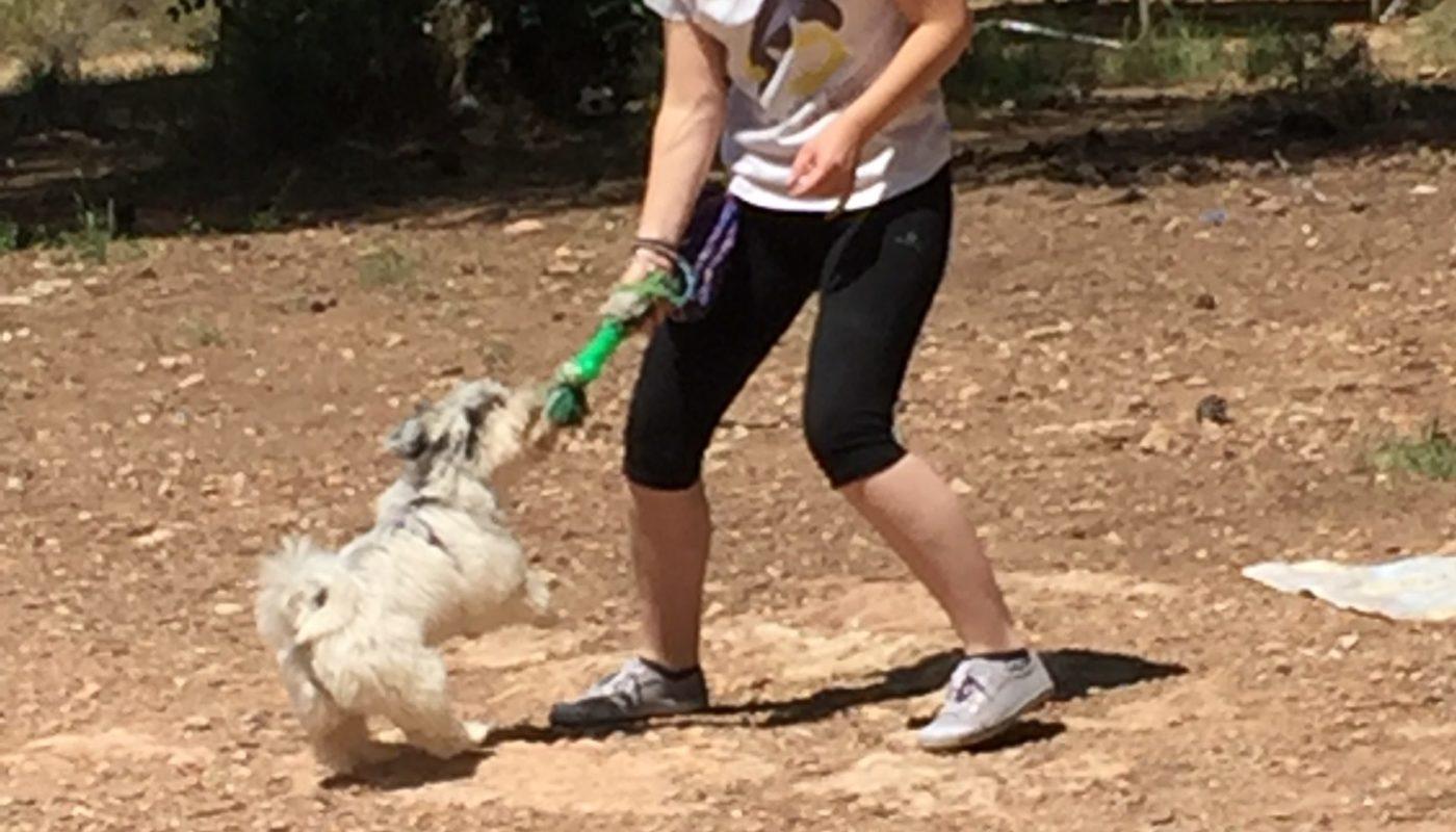 Escuela canina CANILAND - cursos para cachorros