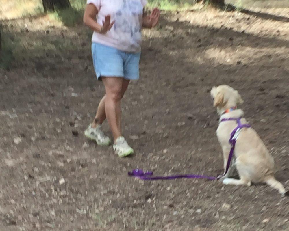 Escuela canina CANILAND - curso de educación para cachorros