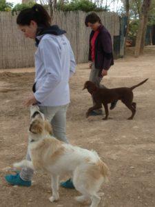 Escuela canina CANILAND - curso de educación para perros jóvenes y adultos