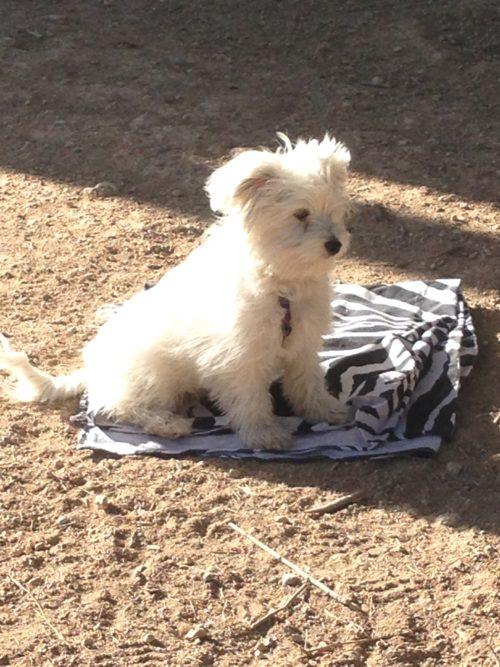 Curso de educación para cachorros, CANILAND, Educación y adiestramiento canino, Valencia