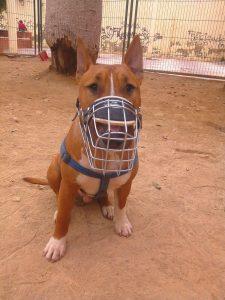 Escuela canina CANILAND - Bozal
