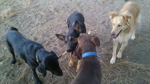 Socialización, CANILAND, Educación y adiestramiento canino, Valencia