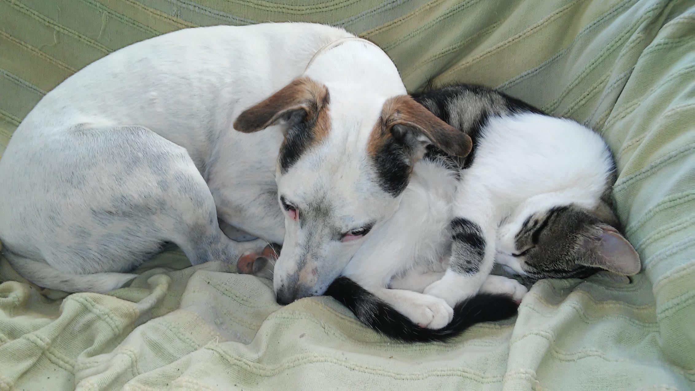 Escuela canina CANILAND - Socialización