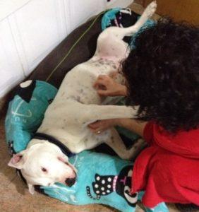 La importancia de la manipulacion, Caniland Escuela canina, Valencia