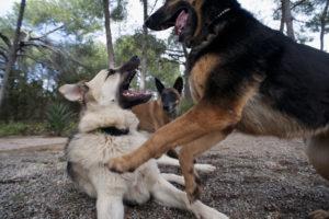 Caniland |Educación canina Valencia