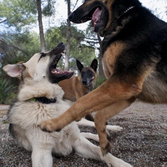 Caniland |Educación canina