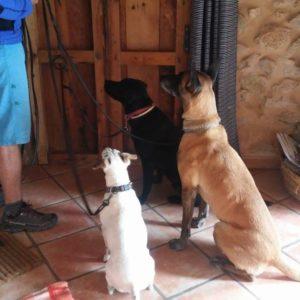 Constancia en la educación, CANILAND, Educación y adiestramiento canino, Valencia