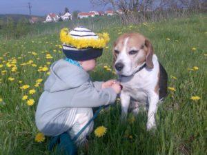 ¿Cómo presentar un bebé a un perro? CANILAND, Educación y adiestramiento canino, Valencia