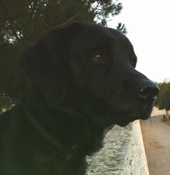 CANILAND Escuela canina Valencia, Adiestramiento y educación canina