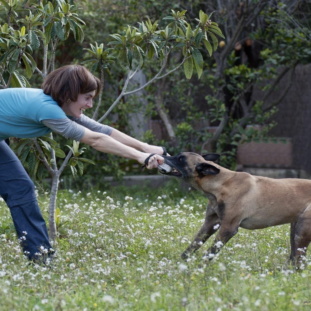 Seminario EL JUEGO, CANILAND Escuela canina Valencia, educación canina