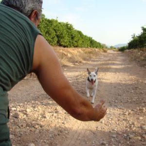Curso LA LLAMADA, CANILAND Escuela canina Valencia, educación canina