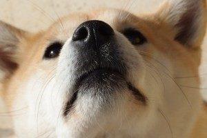 Seminario gestión emocional a través de olfato, CANILAND Escuela canina Valencia, educación canina