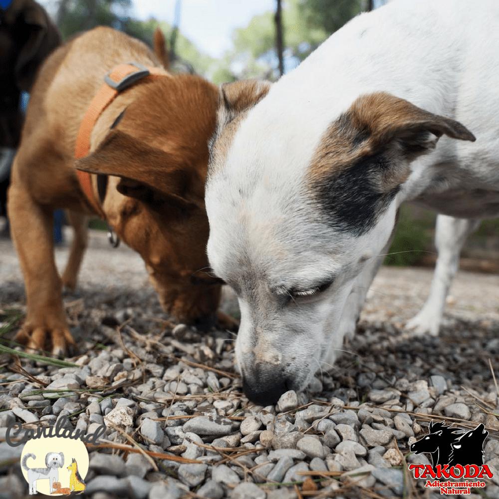 Seminario gestión emocional a través de olfato, TAKODA, CANILAND Escuela canina Valencia, educación canina