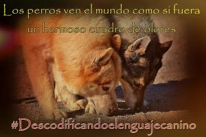 olfato canino conducta