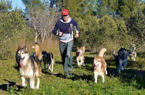 modificacion conducta perros