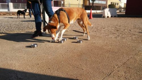 Seminario Gestión emocional a través de Olfato, Caniland Escuela Canina Valencia