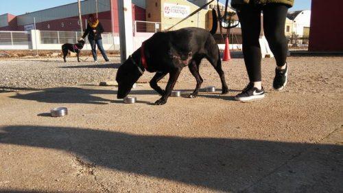 Seminario Gestión emocional a través de Olfato, Caniland Escuela Canina Valencia (4)