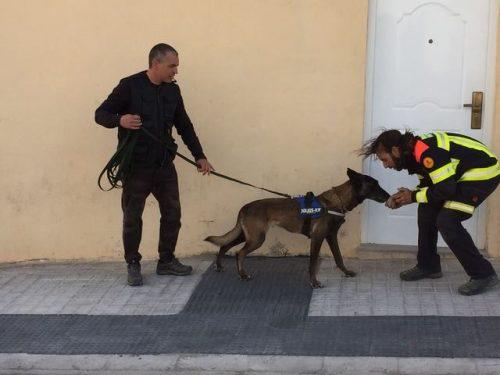 Seminario mantrailing Ernest Capdevila, CANILAND Escuela Canina Valencia