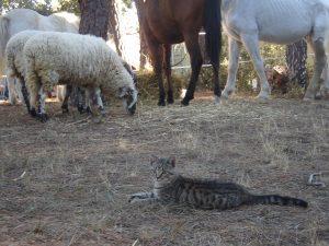 Campamento perruno, CANILAND Escuela Canina Valencia (asociación Arcadia)