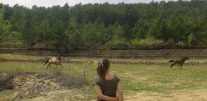 Campamento perruno, CANILAND Escuela Canina Valencia