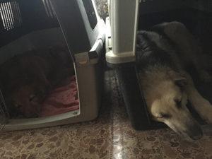 habitación perro