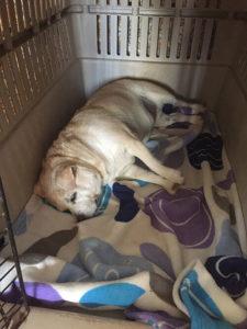 perro durmiendo en el transportín